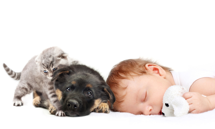 Pets and the developmental benefits for children