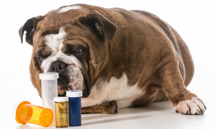 10 Poison Pills for Pets