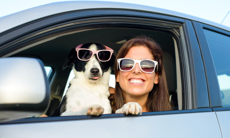 11 Things You Can Do to Make Travel Safer for You and Your Pet