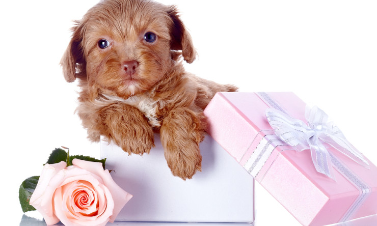 Mother's Day Gift: What Dog Breed Is Right for Your Mom?