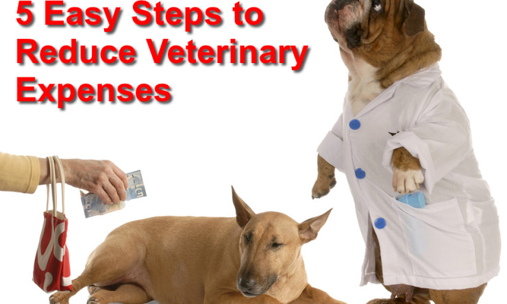 5 Easy Steps to Reduce Veterinary Expenses