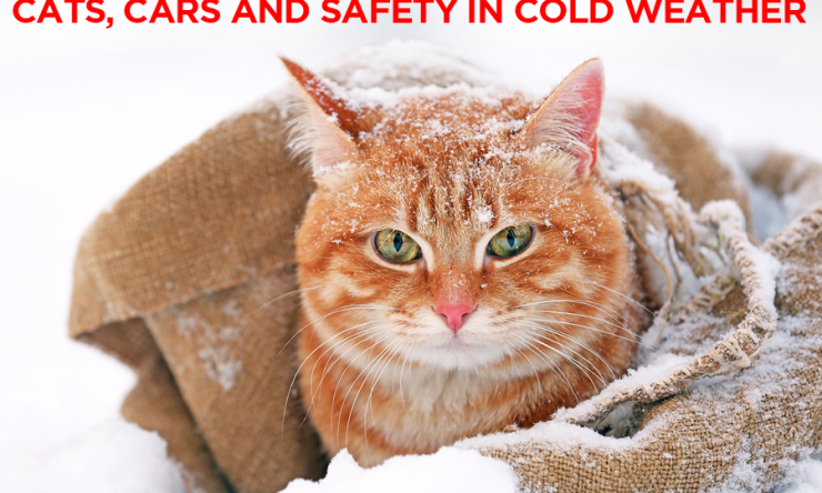 Cats, Cars and Safety in Cold Weather