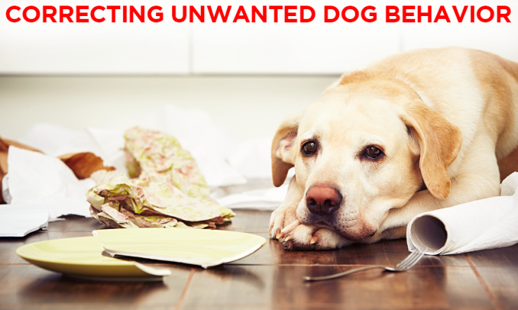 Correcting Unwanted Dog Behavior