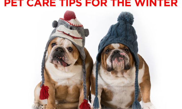 Pet Care Tips for The Winter