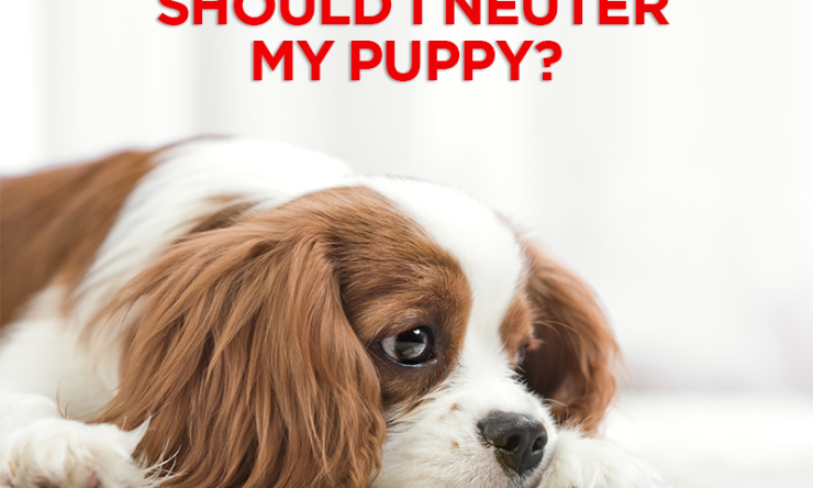 Should I Neuter My Puppy?