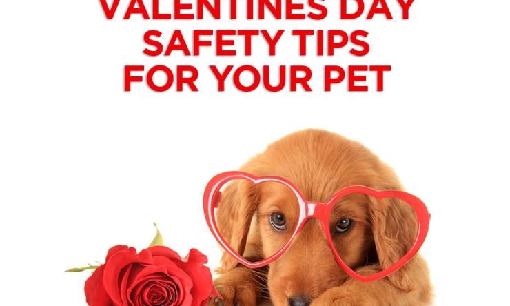 Valentines Day Safety Tips For Your Pet