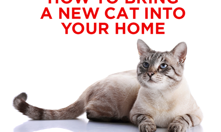 How to Bring a New Cat Into Your Home