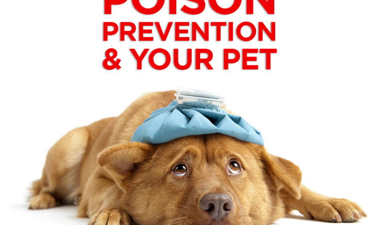 Poison Prevention and Your Pet