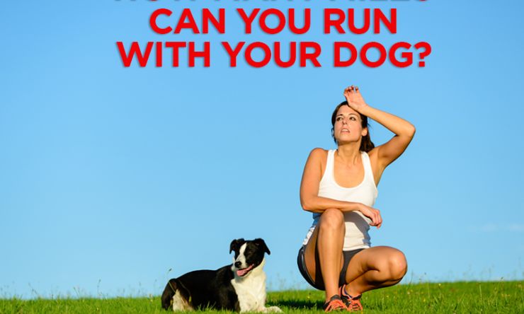How Many Miles Can You Run With Your Dog?