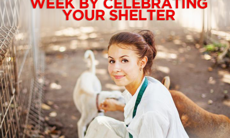 Celebrate Pet Week By Celebrating Your Shelter
