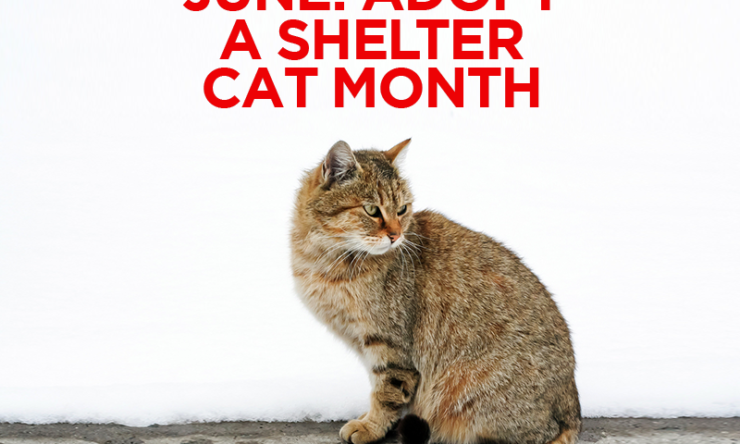 June Is Adopt a Shelter Cat Month