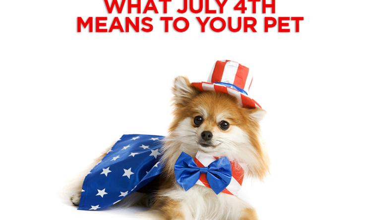 Pet Advice: What July 4th Means To Your Pet