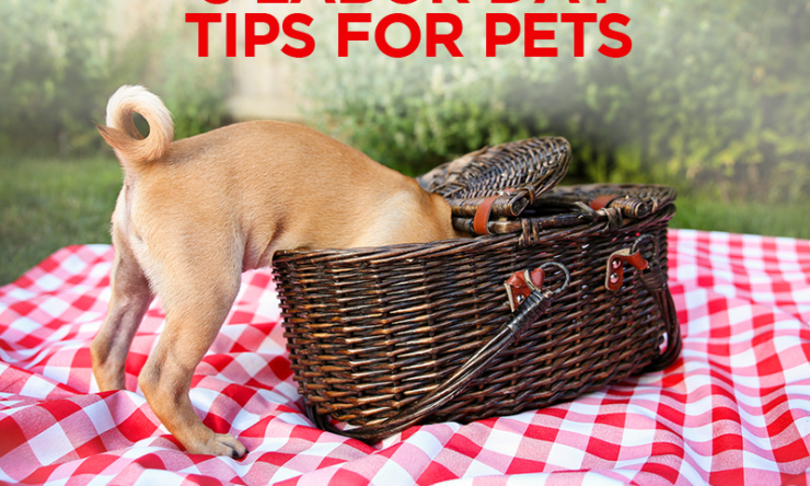 5 Labor Day Tips for Pets
