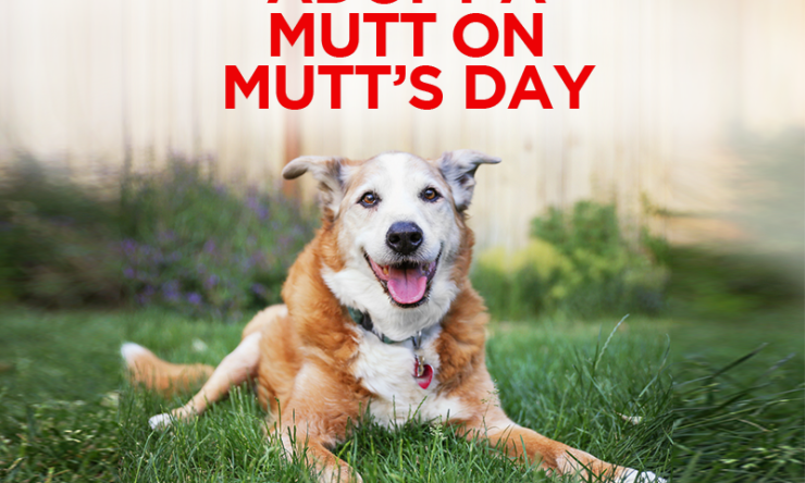 Adopt a Mutt on Mutt's Day!