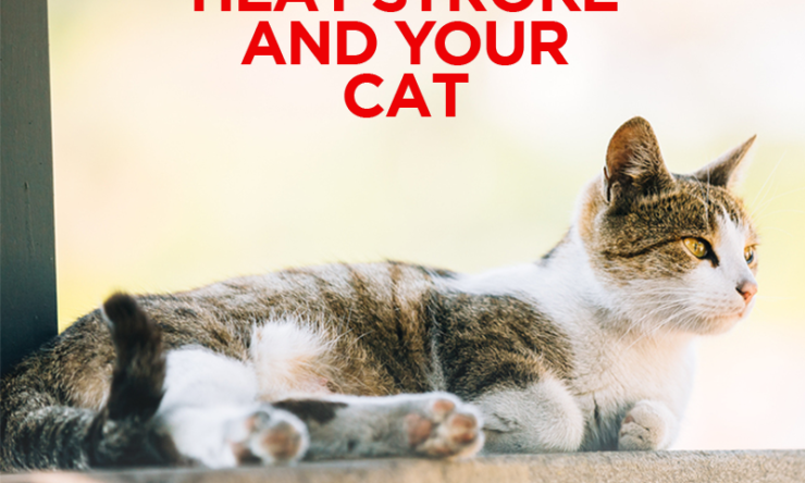 Heat Stroke & Your Cat