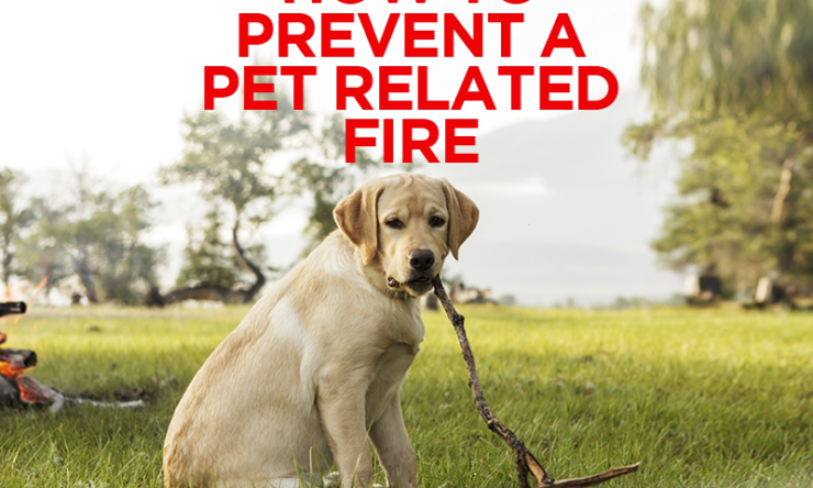 How To Prevent a Pet Related Fire