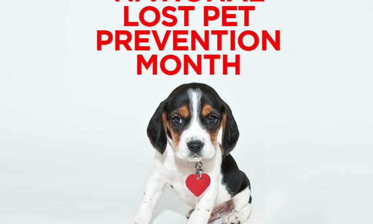 National Lost Pet Prevention Month