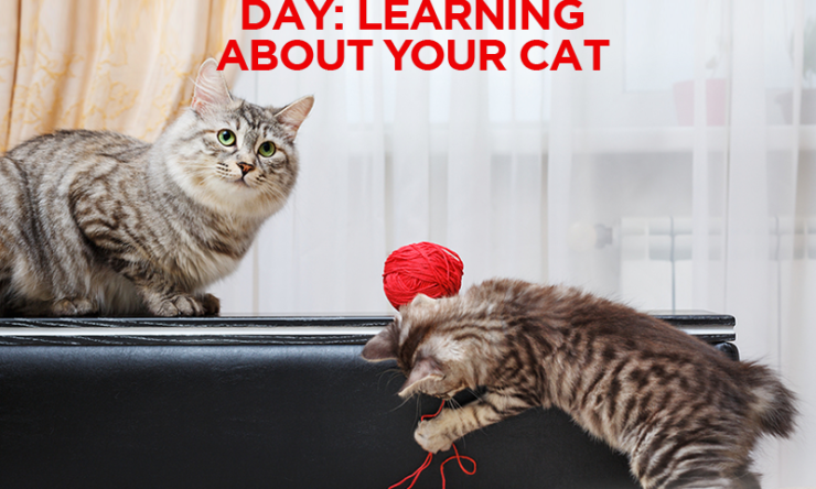 International Cat Day – Learning About Your Cat