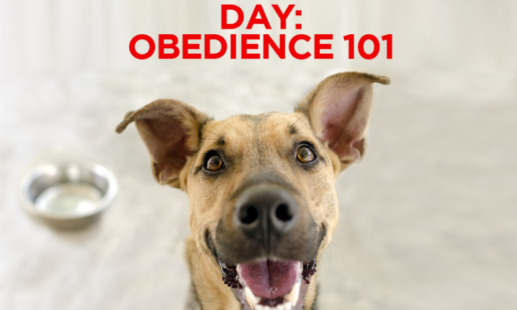 National Dog Day – Obedience 101