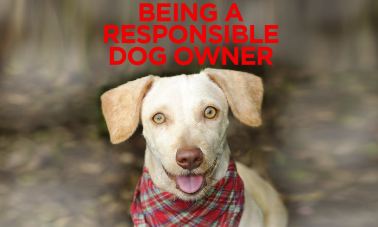 10 Tips To Being A Responsible Pet Owner