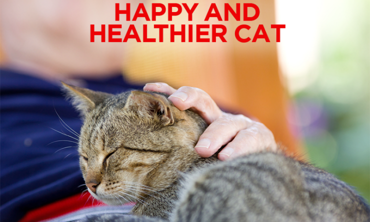 6 Tips For A Happy & Healthier Cat