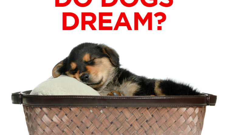 Do Dogs Dream?