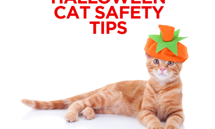 Halloween Cat Safety Tips