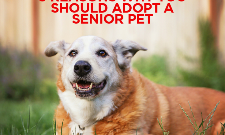 3 Reasons Why You Should Adopt A Senior Pet