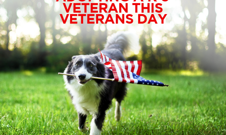 Adopting A K-9 Veteran This Veterans Day