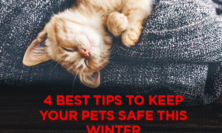 4 Best Tips To Keep Your Pets Safe This Winter