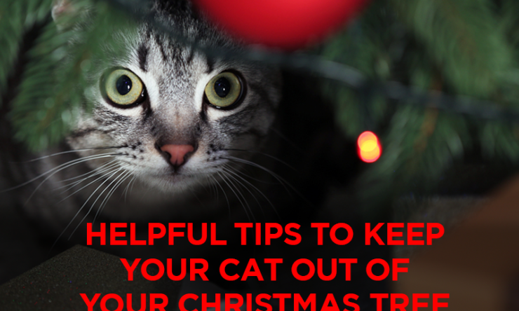 Helpful Tips to Keep Your Cat Out of Your Christmas Tree