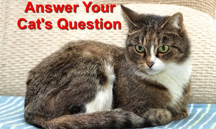 Don't Forget To Answer Your Cat's Questions