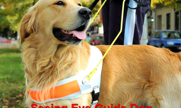 Seeing Eye Guide Dog Annaversary