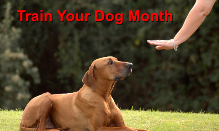 This is National Train Your Dog Month
