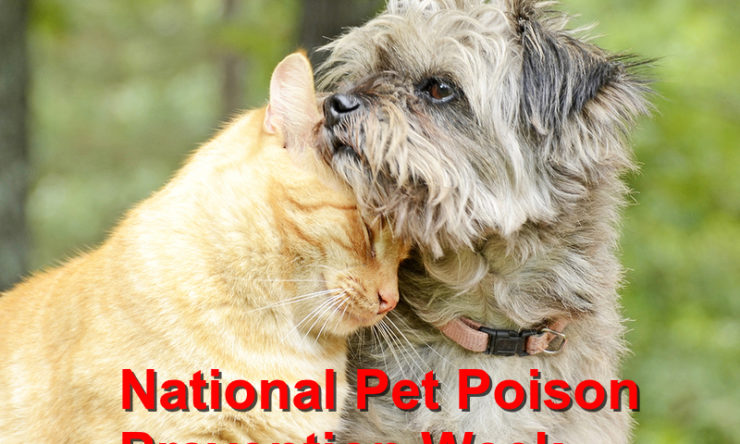 Commemorating the National Pet Poison Prevention Week