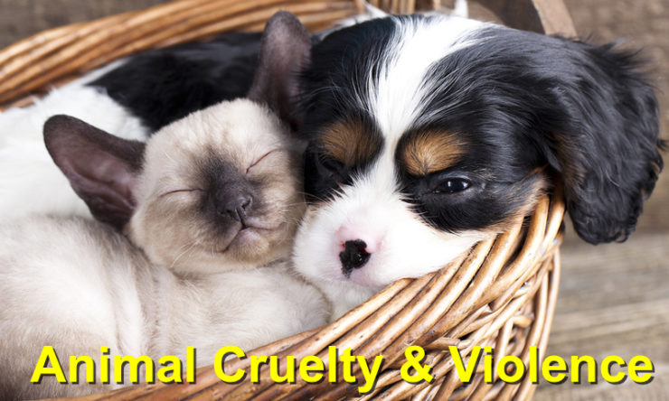 Animal Cruelty And Violence Awareness Week