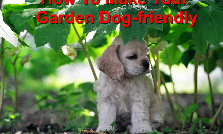 How to Make your Garden Dog-friendly