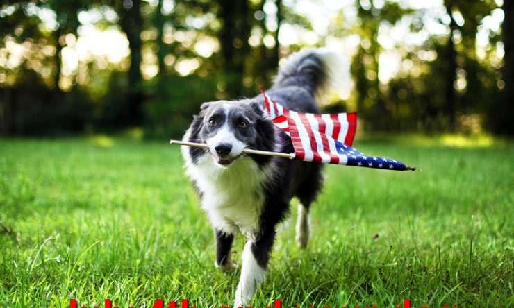 July 4th and your dog