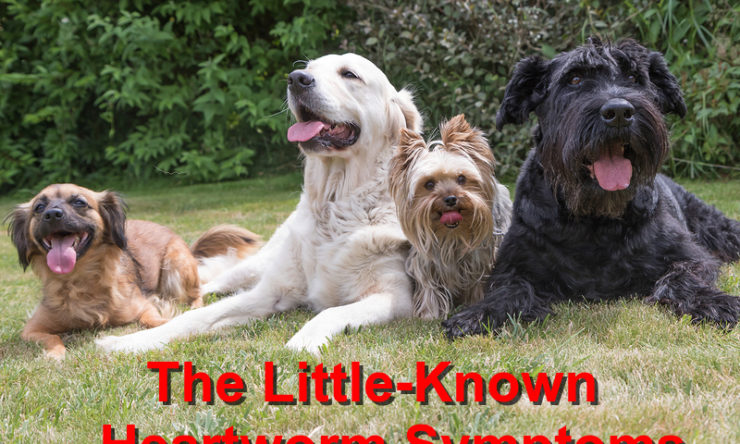 The Little-Known Heartworm Symptoms