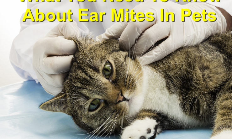 What You Need to Know about Ear Mites in Pets