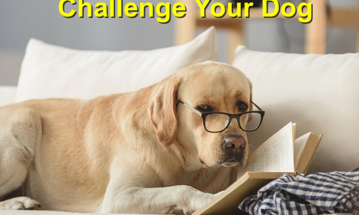 The Best Ways to Challenge your Dog's Mind