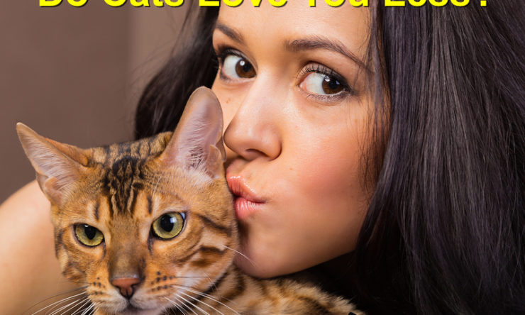 Do Cats Love Their Owners Less? Debunking the Myth