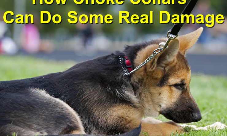 How Choke Collars Can Do Some Real Damage to Your Canine Friend