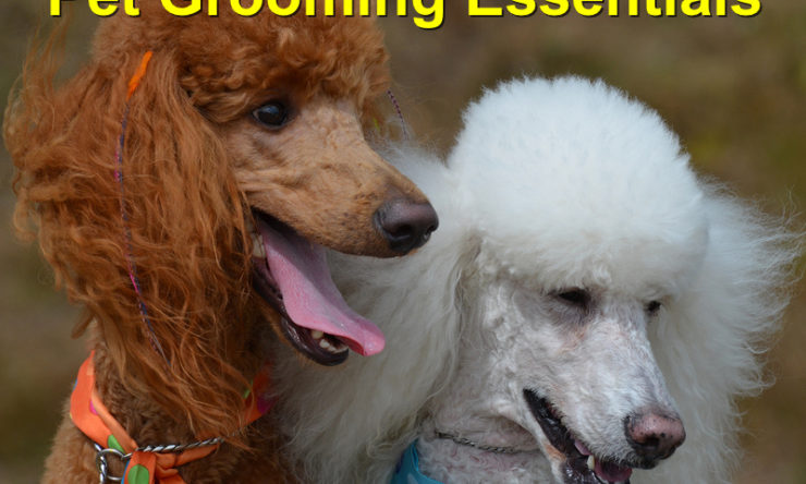 Pet Grooming Essentials: Keeping him in Tip-Top Health