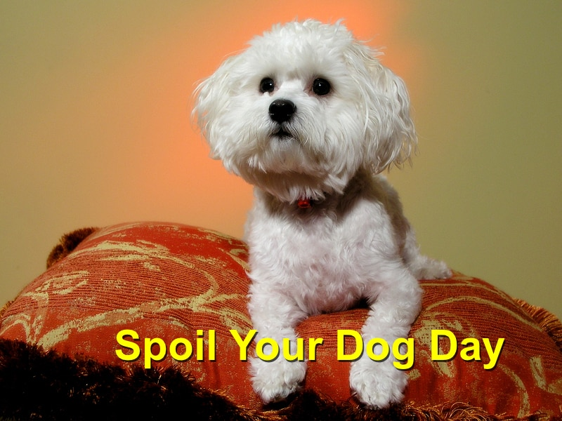 National Spoil Your Dog Day Images