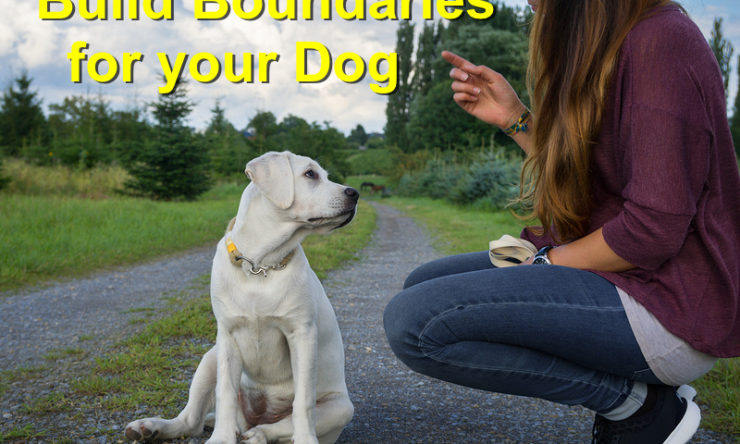 Build Boundaries for your Dog