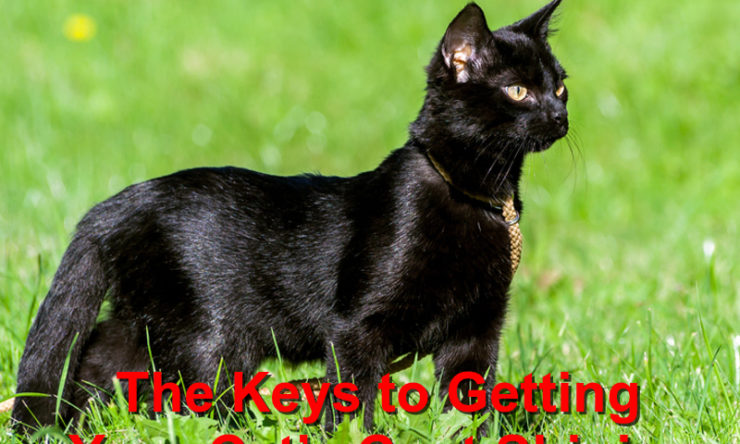 The Keys to Getting Your Cat's Coat Shining
