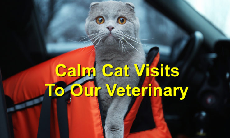 4 Ways To Calm Your Cat During A Visit to the Vet