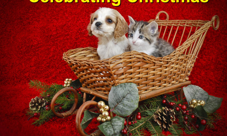 Unique Ideas For Celebrating Christmas With Your Pet