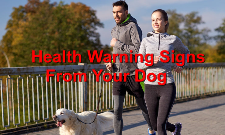 A Look at a Dog's Common Health Warning Signs